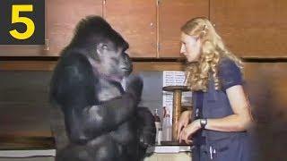 Top 5 Genius Monkeys Caught on Camera