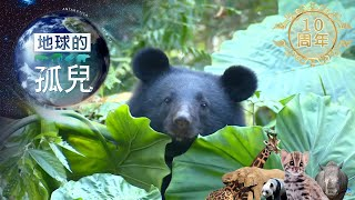 地球的孤兒~熊的國度,台灣黑熊生存保衛戰 Orphans of the Earth / Saving Formosan Black Bears【全集】 白心儀