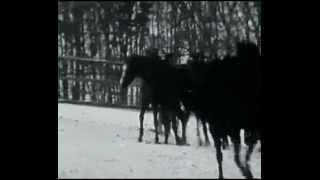 Michal Tučný - Tam u nebeských bran [video]