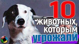 ТОП-10 ЖИВОТНЫХ, В ЧЕЙ АДРЕС ПОСТУПАЛИ УГРОЗЫ... #животные #убийство #прикол #юмор