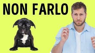 12 Cose che il Tuo Cane Detesta di Te