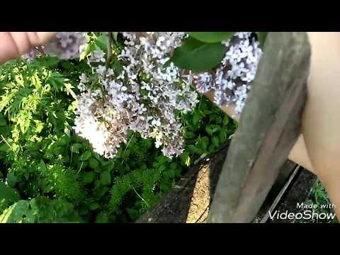 майские и июньские жуки.Как различить пол жуков?