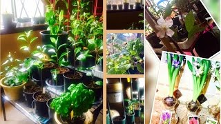 Indoor Gardening Year-Round! Over 100 Edible Plants & Propagating Longevity Spinach