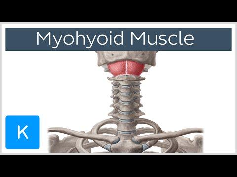 Ćwiczenia ze sztangą na wszystkich grup mięśni w domu