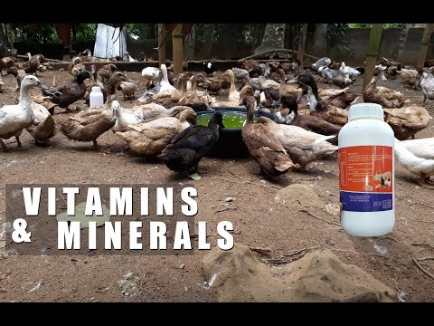, title : 'vitamins and minerals for ducks │Modern Farming Methods