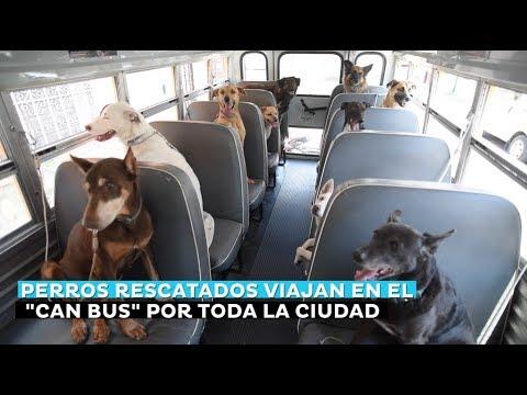 """Perros rescatados viajan en el """"Can Bus"""" por toda la ciudad"""