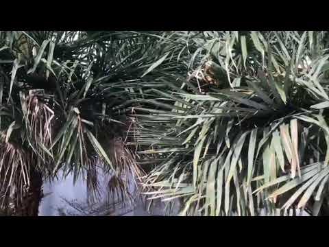 ECE551 BA244 2A VIDEO ADVERTISING