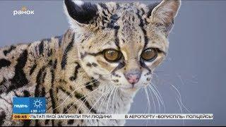 Удивительный мир: животные на грани вымирания