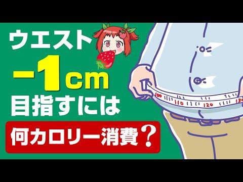 , title : '中年太りはなぜ起きる!?健康的なダイエット方法とは【ゆっくり解説】
