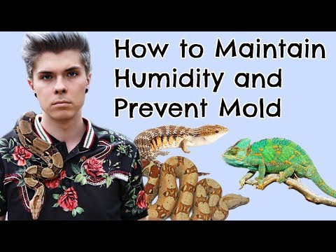 How to Maintain Humidity in Reptile Enclosures! (and preventing mold)