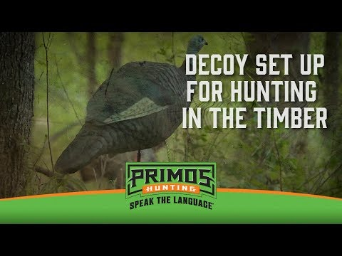 Which Kind of Decoys to Use in the Timber video thumbnail