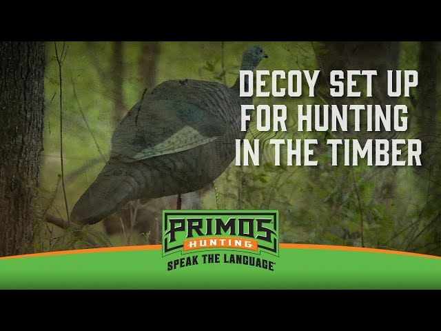 Which Kind Of Decoys To Use In The Timber