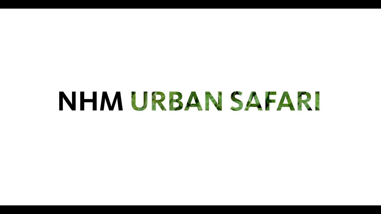 NHM Urban Safari