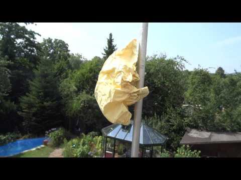 Keine Wespen mehr - Trick funktioniert und hält Plagegeister fern