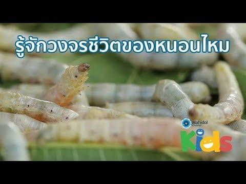 หนอนพยาธิใบไม้ opisthorchiasis