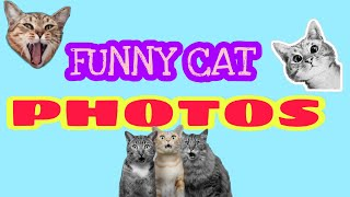 FUNNY CAT PHOTOS 1  #funnycats #trynottolaugh