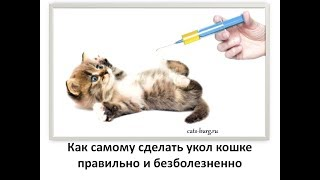 Учимся делать  укол кошке и не допускать ошибок / To make a prick a cat