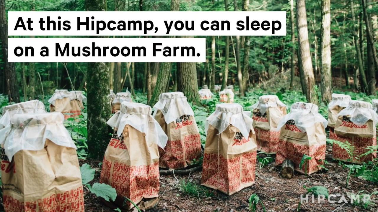 Camp at a Mushroom Farm on Hipcamp