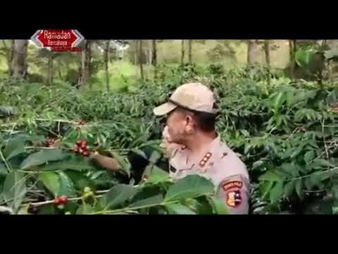 Program Binmas Noken Polri dukung pengembangan Kopi Lanny Jaya