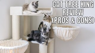 Cat Tree King Review (Pros & Cons)