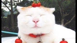Смешные Kошки и Милые Котята 2019 ♥ Cat Marabacha #27