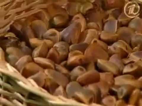 Средства для профилактики лечения глистов