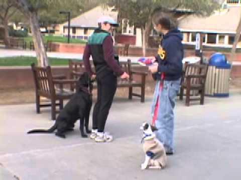 Dog Class: Heeling