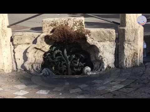 Siena: sciame di api in Piazza del Campo