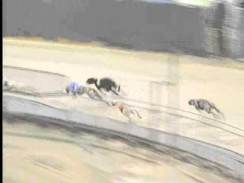Race 35 - Wheeling Island Hotel Casino Racetrack Flite I