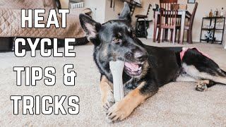 Female Dog In Heat - 5 Tips To Survive Your Dog's First Heat Cycle!