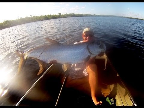 Jungle Tarpon.