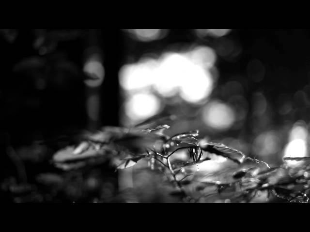 Meditative-moments-with-david-steindl-rast