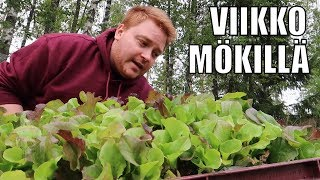 Oman pihan salaatti! - MÖKKIVLOG
