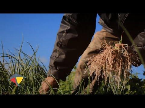 Programa de gestão sustentável da agricultura familiar