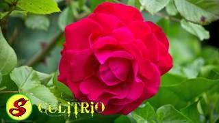 Valentin elizalde   Mi nuevo amor Musica Romantica HD AUDIO MP3