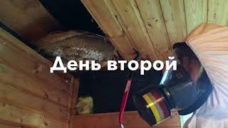 Жесть! Огромное гнездо шершней в доме!
