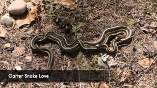 Spring trip video of Apgar Horse loops.