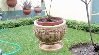 Plantas de interior y sus macetas