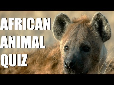 African animal quiz