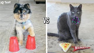 DOG VS CAT IQ TEST | Who Is Smarter?