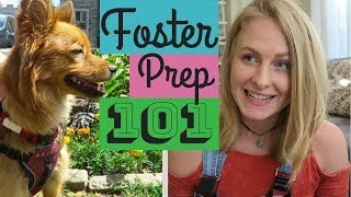 How to Prepare for a Foster Dog
