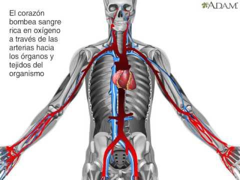 Fármacos para el tratamiento de la presión arterial