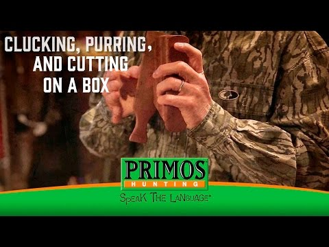 Learn How to Cluck, Purr, and cut on a Box Call video thumbnail