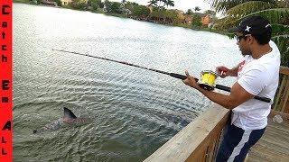 SHARK FISHING In BACKYARD POND! **Freshwater Isolated Lake**