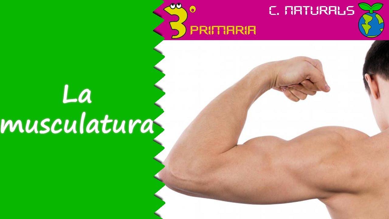 Ciències de la Naturalesa. 3r Primària. Tema 3. La musculatura