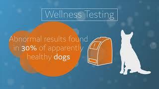 Pet Owner Best Practices