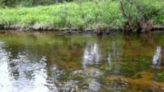 Ловля хариуса на лесной реке