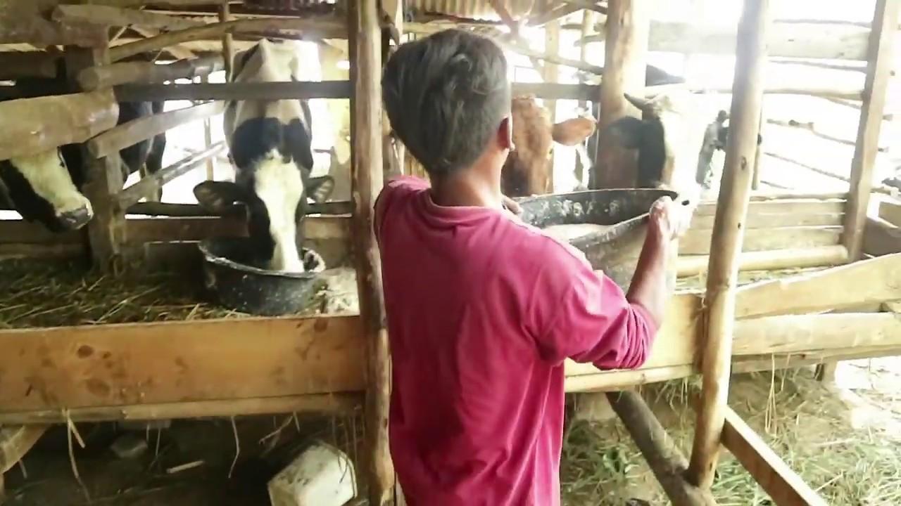 Keren!! Pemuda ini Memilih menjadi Petani. Yuk kita dukung