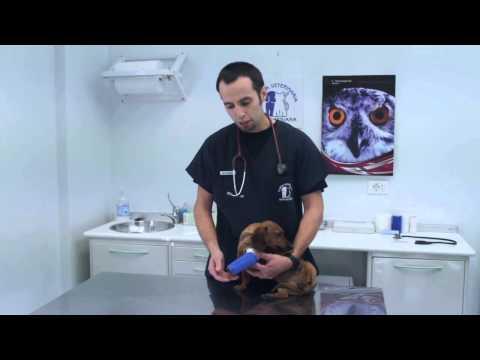 GESTIONE DI UNA FASCIATURA PER ANIMALI - Clinica veterinaria borghesiana - Roma