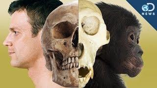 Humans Are Still Evolving!